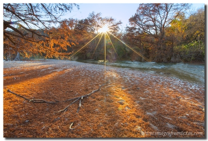A red carpet of cypress leaves blanket the ground at Pedernales Falls State Park in the Texas Hill Country